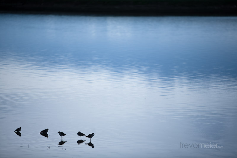 Wallpaper - Birds in the Water preview