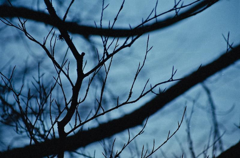 Trees neg scan