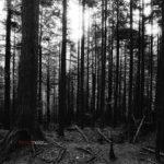 Trevor Meier Wallpaper: Trees (medium)