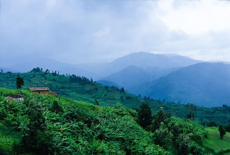 Rwanda: Hope Rises Trailer